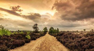 Ein langer Weg von Tim Abeln