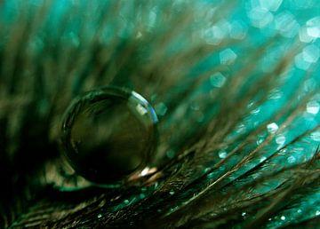 Een groene droomwereld van Kvinne Fotografie