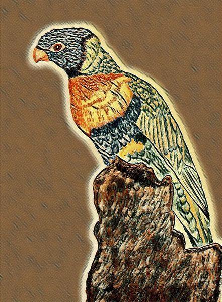 Lori ( Vogel ) Zeichnung von Jose Lok