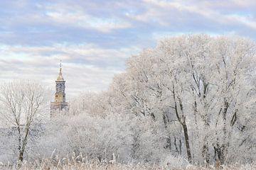 efrorene Bäume mit dem Nieuwe Toren (neuer Aufsatz) in Kampen von Sjoerd van der Wal