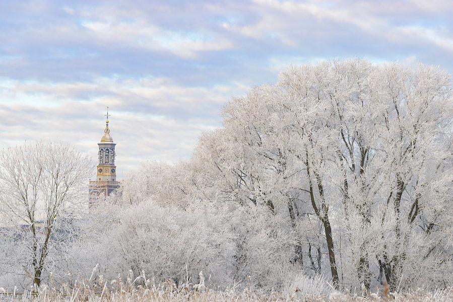 Berijpte bomen in de uiterwaarden van de IJssel bij Kampen met de Nieuwe Toren in de achtergrond