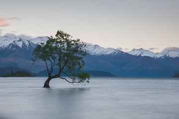 That Wanaka Tree, Nieuw-Zeeland van Tom in 't Veld