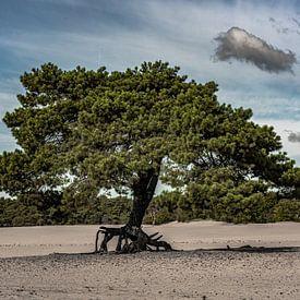 Zandverstuiving de Soester Duinen. van Jaap van den Berg