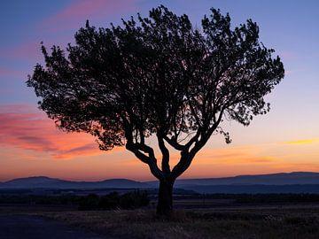 Mein Freund, der Baum von Wim Kohne
