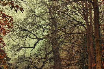 Magisches Licht im Liesbos von Cees van Gastel