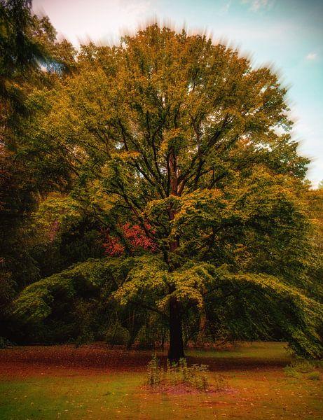 Stralende boom van Wieland Teixeira