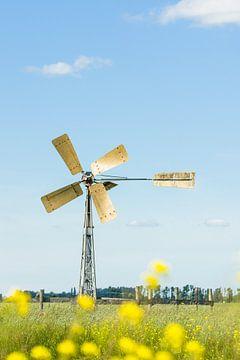 Windmühle auf der Wiese von Tony Buijse