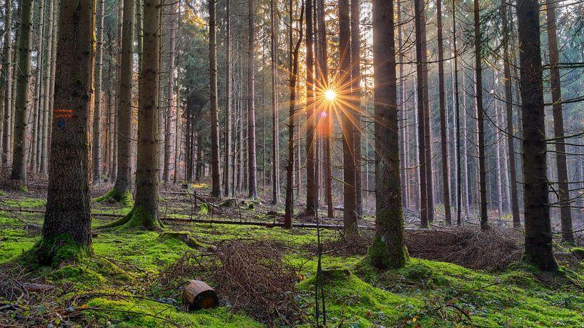 Dezembersonne von Uwe Ulrich Grün