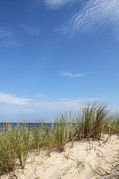 Düne von Ostsee Bilder
