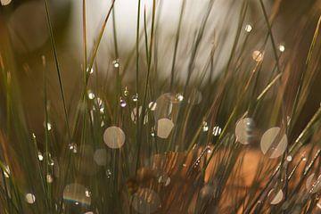 gazon décoratif sur Tania Perneel