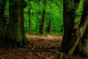 Ein weiterer Tag im Wald von Tim Abeln