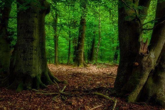 Weer een dag in het bos van Tim Abeln