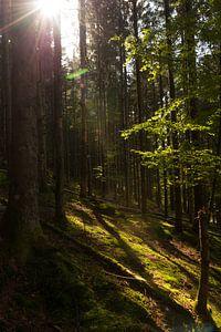 Bosrijk Vogezen