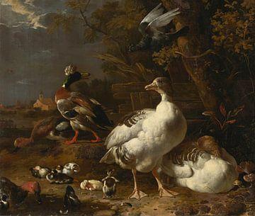 Melchior d' Hondecoeter, Ganzen en eenden van