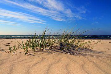 Am Ostseestrand von Ostsee Bilder