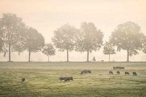 Fietser in de mist van