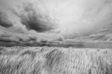 Duin bij Petten (N-H) van Peter Baak