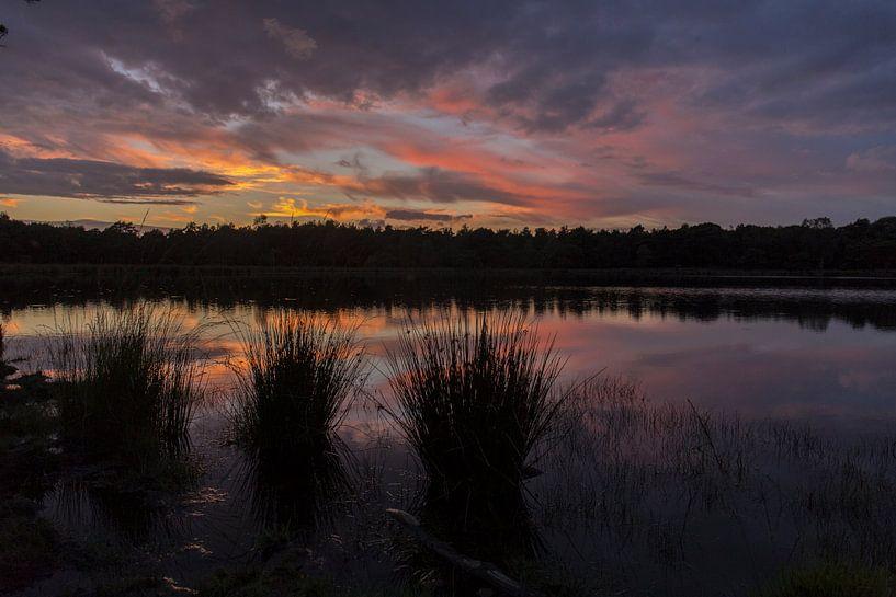 Zonsondergang met graspollen Strijbeekse Heide, Noord Brabant, Nederland, Holland van Ad Huijben