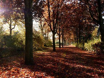 bospad in de herfst met gevallen bladeren van Joke te Grotenhuis