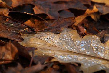 Herbstlich von Esther Leijten-Kupers