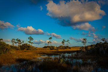 Everglades von Wim Alblas