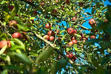 De appelboom van Norbert Sülzner