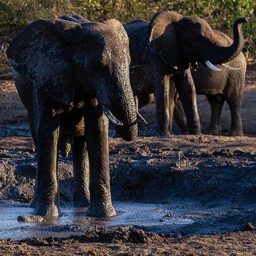 Badende olifanten bij een waterpoel van Arthur van Iterson