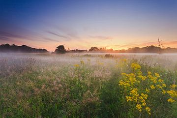 De witte wieven bij zonsopkomst in het gebied van de Drentsche Aa van