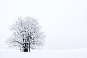 Un arbre dans la neige