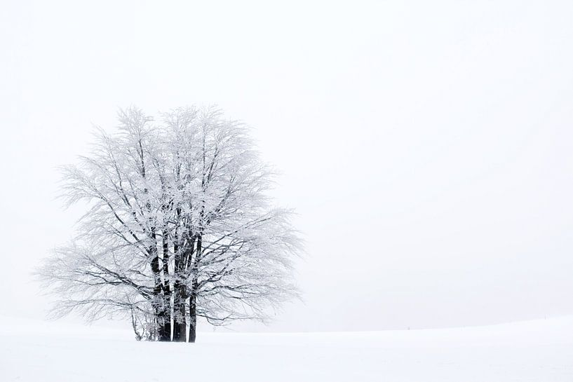 Boom in sneeuw van Sam Mannaerts Natuurfotografie