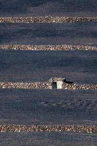 Landbouwpercelen op Lanzarote