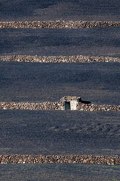 Landbouwpercelen op Lanzarote sur
