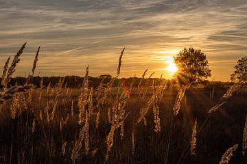 Coucher de soleil sur la bruyère sur Sjors Gijsbers
