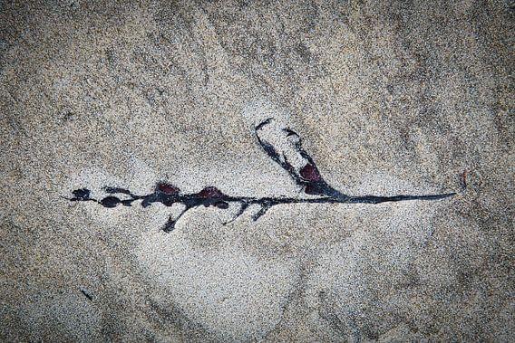 aangespoeld aan het strand