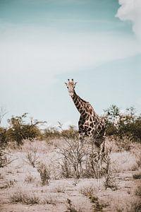 Giraffe in Afrika in het wild, Namibië Etosha Nationaal Park van Helena Schröder