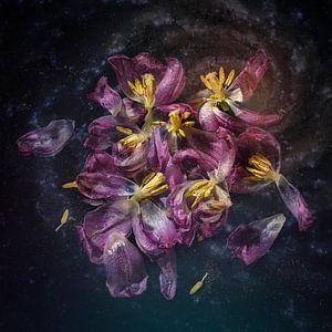 Tulpen im Verfall von Monique van Velzen