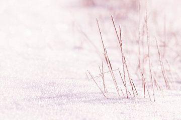 IJs en sneeuw van Thomas Heitz