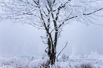 Baum im Moor, mit Schnee bedeckt von Karijn Seldam