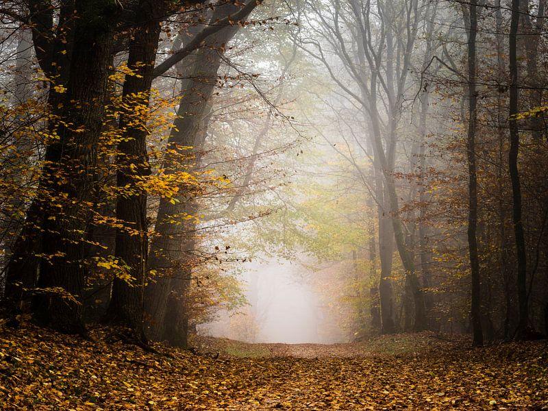 Herfst avontuur van Tvurk Photography