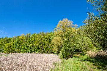 Landschap met riet en bomen bij Kuchelmiß van Rico Ködder