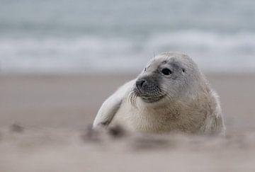 Zeehonden pup van Marleen Baas