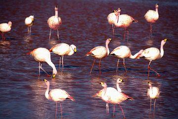 flamingo's van Stefan Havadi-Nagy