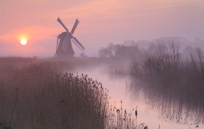 Purple Dawn van Sander van der Werf