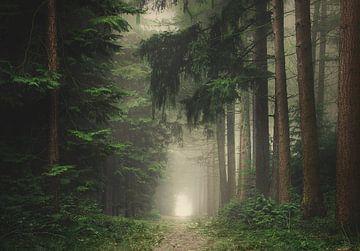 Groen mistig en sfeervol bos van