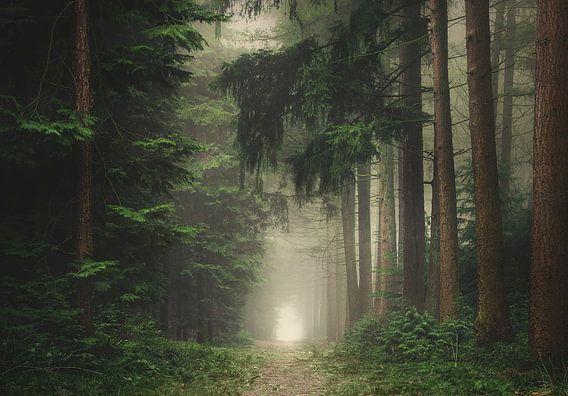 Groen mistig en sfeervol bos