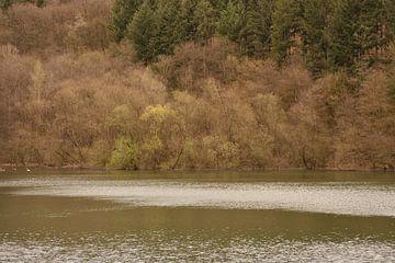 Herfstbos bij het meer van Philipp Klassen