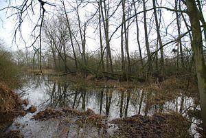 Bomen weerspiegeling in het water. von Ingrid Van Maurik