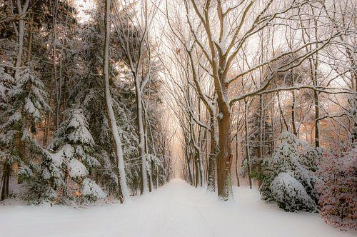 Winter in het bos van