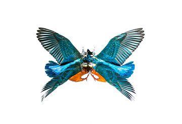 butterfly sur Mario Cea Sanchez
