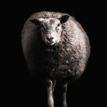 Schaf von Ines van Megen-Thijssen